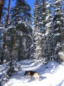 Leah on the Lamphier Creek Trail