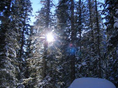 Sunburst on Lamphier Creek Trail