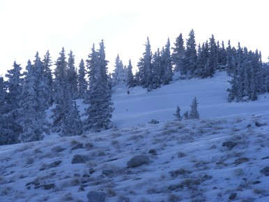 Sturdy conifers above Old Monarch Pass able to withstand strong, continuous winds