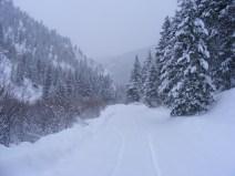 Snowy Day on Gold Creek just below Spring Gulch