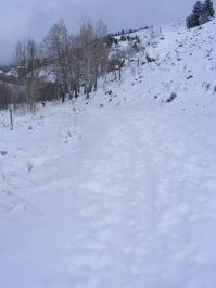 Fresh snow on Willow Creek