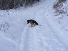 Leah on Gunnison National Forest Road 882 cum ski trail