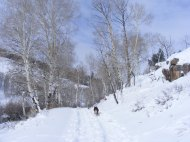 Leah following Draco on our Willow Creek ski