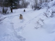 Draco bounding through the snow on East Willow Creek
