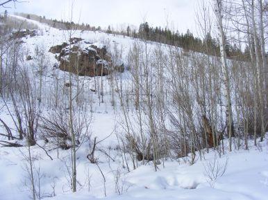 A scene of aspen boles on Willow Creek