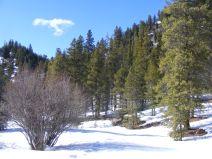 Forest along Quartz Creek