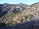 Pinon studded hillside along the Stultz Trail