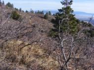 Scrub oak along the Stultz Trail