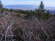 Oak along the Stultz Trail
