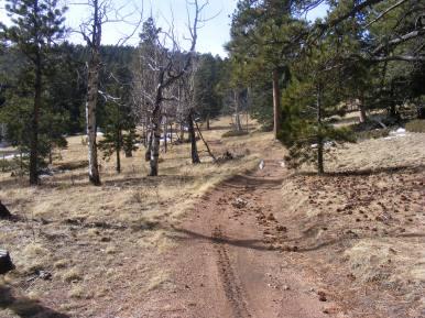 The Stultz Trail near its upper terminus