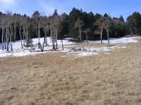 Dormant aspen near the Stultz Trail