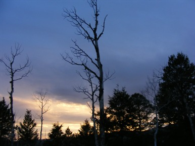 Forested ridge silhouetted against the dusk sky