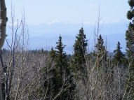From East Red Creek, looking over the forest to the distant San Juan Mountains