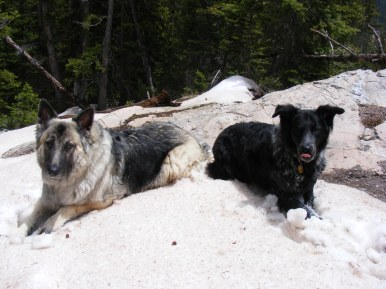 Sheba and Lady Dog, in the snow posing
