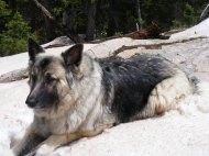 Sheba on the Lamphier Lake Trail