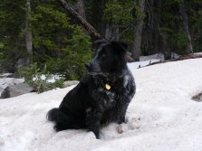 Lady Dog sitting in the snow on the Lamphier Lake Trail