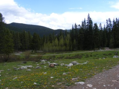 All is green at Gold Creek Campground near the Lamphier Lake Trailhead
