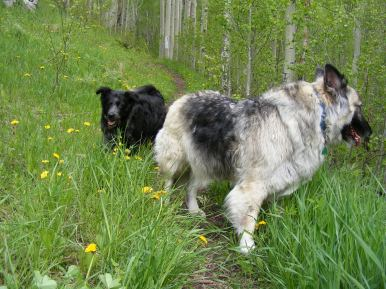 Sheba and Lady Dog on the Lion Gulch Trail