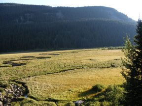 Evening's light shining on the Second Meadow of Elk Creek