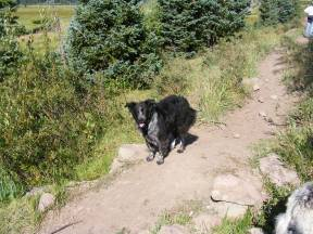 Lady Dog on the Elk Creek Trail in the South San Juan Wilderness of Rio Grande National Forest