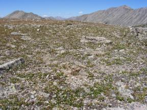 Alpine tundra at the upper end of Pomeroy Gulch
