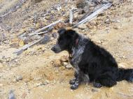 Lady Dog near the Molly Murphy Mine