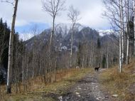 Gothic Mountain with a dusting of snow; Lady Dog on the Copper Creek Trail