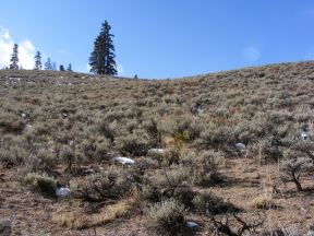 Sagebrush on the Gunnison National Forest within the Fossil Ridge Recreation Management Area