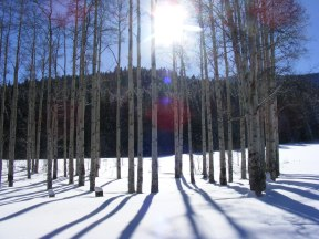 Midday sun on the Ides of December, aspen boles starkly rising from the snow blanketed land on Mill Creek