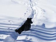 Lady Dog on Mill Creek