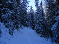 Ski tracks through the forest on Mill Creek