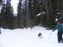 Sheba leading the way down the ski trail