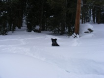 Lady Dog in deep snow on Gold Creek