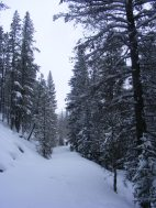 New, untracked snow on the Gold Creek Road