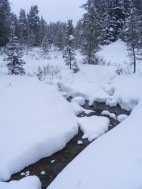 Fresh snow on the banks of Gold Creek