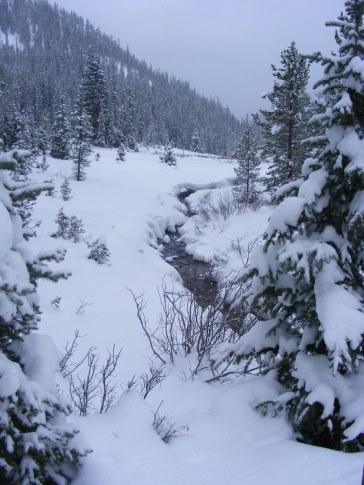 Gold Creek on a snowy day near New Dollar Gulch