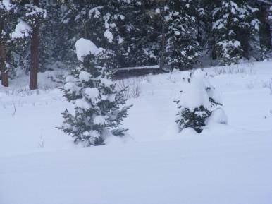 Fresh snow on Gold Creek