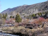 Looking upstream on East Elk Creek