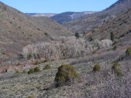 The valley of East Elk Creek, cottonwood waiting to bud out