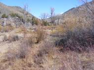Willow and cottonwood on East Elk Creek in late April