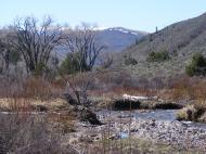 A typical scene on East Elk Creek