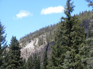Hoodoos and forest on East Elk Creek above Bear Wallow Gulch