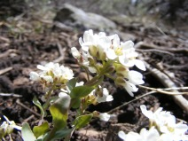 Diminutive but nonetheless beautiful and a sure sign that Spring is on its way