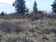 A herd of elk near Point 9154