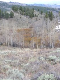 Aspen and willow in an unnamed gully, a sure sign of water near the surface