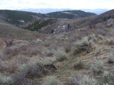 The Cochetopa Hills above Alder Creek