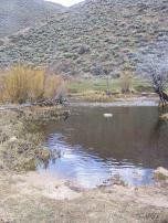 A beaver pond on Alder Creek