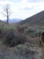 Stark, lone aspen on Alder Creek looking downstream towards Razor Creek Dome