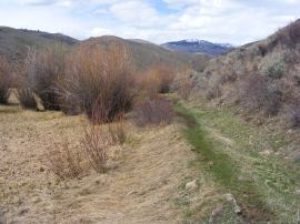 Looking up towards Fossil Ridge on Alder Creek, along the little used trail