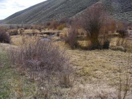 Soon, this scene on Alder Creek will be flush with verdure